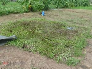 เกษตรกรวังคีรีผลิตน้ำหมักปราบวัชพืชแทนสารเคมี ปลอดภัยต่อร่างกาย-สิ่งแวดล้อม