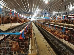 """ฟาร์มไข่ไก่อัจฉริยะ """"พรรัตภูมิ ฟาร์ม"""" ต้นแบบเกษตรกรฮึดสู้ปั้นคุณภาพแข่งรายใหญ่"""