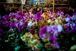 ปักกิ่งเปิดสวนแสดงพืชสวนโลกให้เข้าชมอีกครั้ง ถ่ายทอดจิตวิญญาณสีเขียวจีน