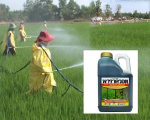 เลิกใช้สารพิษในการทำเกษตร : การต่ออายุคนไทย!