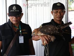 ไม่จำ! จนท.บุกจับเฒ่าพัทลุงวัย 60 ปีลอบค้าสัตว์ป่า พบถูกจับวันเดียวกับปีที่แล้ว