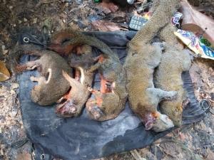 เศร้า! จนท.เขตรักษาพันธุ์สัตว์ป่าเขาประ-บางคราม รวบ ชาย 3 คน ลักลอบล่าสัตว์ป่า