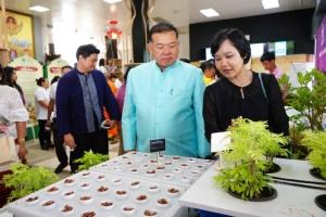 """เปิด 9 ตำรับยาชาติ สูตรจารึกวัดโพธิ์ มี """"กัญชา"""" ผสม จ่อโปรโมตงานสัปดาห์ภูมิปัญญาแผนไทย"""