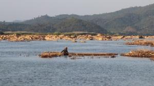น้ำโขงลดจนแห้งชาวบ้านแห่จับปลาขายทำเงินแต่ละวันนับพันบาท