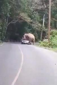 """(ชมคลิป) ระทึก! """"พี่ดื้อ"""" ช้างป่าเขาใหญ่ ขึ้นคร่อมขย่มเก๋งนักท่องเที่ยวรถพังหลังคายุบ รอดตายหวุดหวิด"""