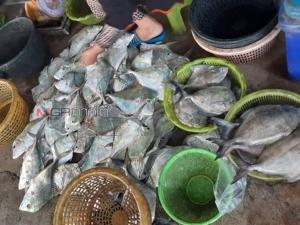 ชื่นมื่น! ชาวประมงพื้นบ้านปะนาเระ จ.ปัตตานี จับปลาได้เยอะสร้างรายได้อย่างงาม