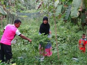 ชื่นชม! หนูน้อยเกษตรกรเด็กดีศรีควนสตอ ใช้เวลาว่างปลูกพืชผักเก็บขายสร้างรายได้เสริม