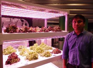 """""""ไฟปลูกพืช""""  ปรับแสงได้ตามความต้องการ ไม่ง้อแดด ไม่ต้องกังวลสภาพอากาศ"""