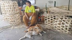 ทั้งทึ่งทั้งประทับใจ..แม่หมานอนให้แมวเหมียวบีบนมดูดเหมือนลูกตัวเองแทบทุกวัน