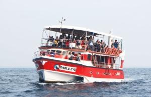 """ล่องเรือชมความน่ารักของ """"โลมา"""" ที่เมืองมิริสซ่า เมืองใต้สุดของประเทศศรีลังกา"""