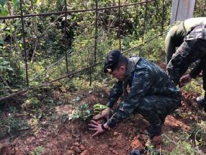 ชาวบ้าน จับมือ หน่วยงาน ปลูกมะขามเปรี้ยว2,700 ต้น ที่แนวรั้วกันช้างป่าละอู