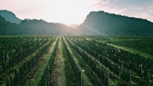 ไร่องุ่นไวน์กราน-มอนเต้ (GranMonte Vineyard and Winery)
