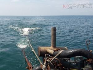 ตะลึง! ชาวบ้านพบฉลามวาฬยักษ์หนักกว่า 2 ตัน ลอยตายที่เกาะลิบง