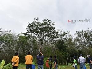 กยท.นำโดรนบินพ่นยาฆ่าเชื้อราระบาดต้นยางชาวบ้าน หลังพบ 6 จังหวัดใต้ติดเชื้อแล้ว