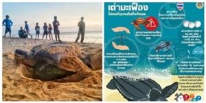 ดร.ธรณ์ แนะ 6 ข้อ ช่วยปกป้องแม่เต่ามะเฟือง หลังโผล่วางไข่หาดท้ายเหมือง