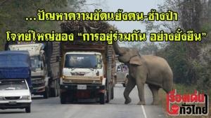 """(ชมวิดีโอ) ปัญหาความขัดแย้งคน-ช้างป่า โจทย์ใหญ่ของ """"การอยู่ร่วมกันอย่างยั่งยืน"""""""