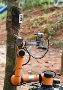 หุ่นยนต์กรีดยางอัตโนมัติ ขณะทดสอบทำงานกรีดยางที่สวนยางแห่งหนึ่ง ในมณฑลไห่หนานทางตอนใต้ของจีน (ภาพซินหัว)