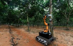 (ภาพ) หุ่นยนต์กรีดยางอัตโนมัติ ในสวนยางไห่หนาน