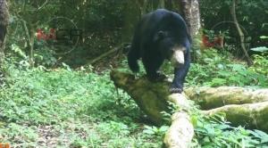 อุทยานแห่งชาติแก่งกระจาน ป่าแห่งความสุขของผองสัตว์