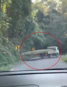 หวาดเสียว! หนุ่มขับรถตามหลังรถบรรทุกไม้ขึ้นม่อนแจ่ม เสี่ยงเกิดอันตราย (ชมคลิป)