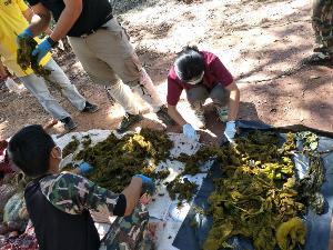 อนาถแท้! ผ่าแล้วซากกวางป่าขุนสถาน พบขยะพลาสติกยัน กกน.เต็มท้องถึง 7 กก.