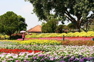 เนรมิตดอกไม้งามนับแสนดอกจัดงาน พรรณไม้งามอร่ามสวนหลวง ร.๙