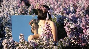 อานิสงส์แรง! คนฮิตตามรอยดาราสาวตัวแม่ แห่จองคิวถ่ายรูปกลางทุ่งดอกไม้แม่ริมข้ามปี