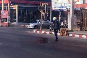 ชื่นชม! นักเรียนชายจอดจยย.ข้างถนน เก็บซากสุนัขที่ถูกรถชน เพื่อไม่ให้ถูกเหยียบซ้ำ