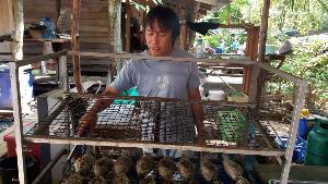 (ชมคลิป)ย่างทีกลิ่นฟุ้งเต็มตลาดซาวไฮ่! หนุ่มบ้านไร่ต่อยอดบ่อปลาหมอหลังบ้าน จับย่างสมุนไพรขายวันหยุดลูกค้าตรึม