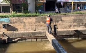 ฮีโร่! ไม่จำเป็นต้องมีพลังวิเศษ หนุ่มวินช่วยสุนัขตกน้ำสุดกำลังเพื่อให้มันปลอดภัย (ชมคลิป)