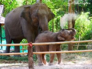 """ชม """"10 โมเมนต์สุดน่ารัก"""" ของ """"ชบาแก้ว"""" ช้างน้อยจอมซน ขวัญใจคนไทย"""