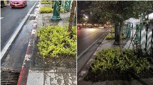 ชาวเน็ตบ่น ฟุตปาธสนามหลวง ลงต้นไม้เพิ่ม สัญจรลำบาก วอน