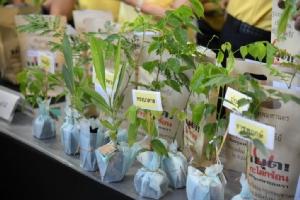 กทม.แจกกล้าไม้ฟรี 1 ล้านต้น ให้ ปชช.ช่วยสร้างพื้นที่สีเขียว เพิ่มปอดให้เมือง
