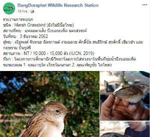 เพจ BungBoraphet Wildlife Research Station