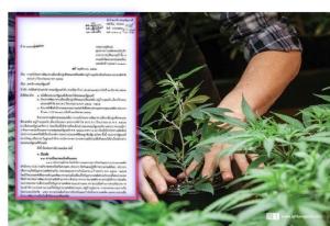 """ยธ.เบรคเจียดงบฯนำร่องปลูกพืชอื่นแทน""""กัญชา""""ในสปป.ลาว เหตุติดพื้นที่ควบคุมพิเศษ กระทรวงป้องกันปท. จ่อหาพื้นที่ใหม่"""