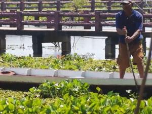 คลื่นผักตบชวาอัดแน่นเต็มทะเลน้อย ทำชาวบ้านอดทำมาหากิน ผู้ว่าฯ สั่งเร่งแก้ไข