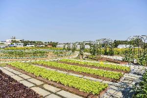 แสนสิริ เปิด Sansiri Backyard @T77 Community คอมมูนิตีสีเขียวเพื่อการอยู่อาศัยอย่างยั่งยืน