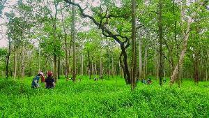 ส่วนหนึ่งของป่าในสถานีวิจัยสิ่งแวดล้อมสะแกราช