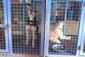 จ่อเพิกถอนเอาผิด! สถานสงเคราะห์สัตว์ฝรั่งหัวร้อน สั่งขังลูกจ้างในกรงหมา-ทารุณกรรมสัตว์
