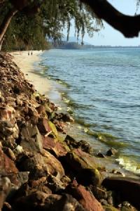 ทะเลตราดก็มีแพลงก์ตอนบลูม! เตือนนักท่องเที่ยวงดเล่นน้ำจนกว่าจะใสเช่นเดิม