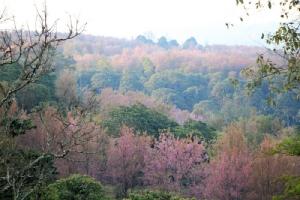 ภูลมโล หุบเขาสีชมพู (แฟ้มภาพ)