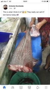 แตกตื่นทั้งตลาดสมุย หลังพบแม่ค้าชำแหละปลาคล้ายฉลามวาฬ คาดเป็นปลาโรนัน ดร.ธรณ์เผยเดินหน้าดันเป็นสัตว์คุ้มครอง
