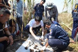แทบช็อก! พบโครงกระดูกมนุษย์ถูกทิ้งกระจายกลางไร่อ้อยเมืองบ้านบึง จ.ชลบุรี