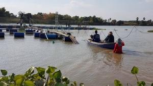 ภัยแล้งกระทบการเลี้ยงปลากกระชังในแม่น้ำเจ้าพระยา เกษตรกรอยู่ยาก