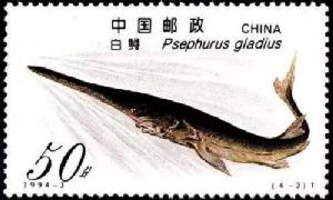 """ฉลามปากเป็ด หนึ่งใน """"สามราชาแห่งลุ่มน้ำแยงซี"""" เหลือแต่ชื่อและรูปภาพ  (ภาพ ไชน่า เดลี่)"""