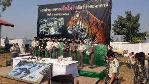 เผาทิ้งไม่เหลือซากเสือโคร่งค่า 3 ล้าน แก๊งค้าสัตว์ป่าลอบขนจากอุ้มผางออกมุกดาหาร