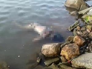 ผงะพบศพชายนิรนามลอยตายโผล่ข้างวัดแหลมพ้อ คาดกระโดดสะพานติณฯ