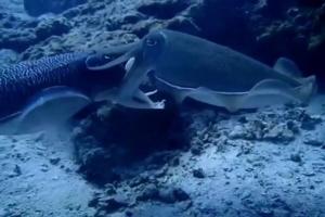 ตื่นตา! ฝูงปลานานาชนิดแหวกว่ายอวดโฉมทะเลเกาะลันตา บ่งชี้ความอุดมสมบูรณ์ของท้องทะเล