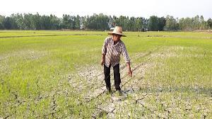 เตือน! เกษตรกรรับมือภัยแล้งแม่น้ำยมแห้งขอด-ข้าวตายแล้วเกือบ 3 หมื่นไร่