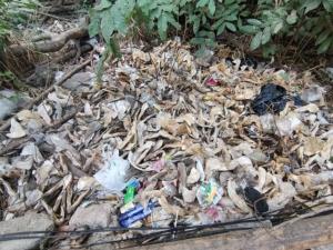 มาจากไหน! พบชิ้นส่วนกรามล่างและฟันสัตว์นับพันชิ้นถูกกองทิ้งริมถนนพัทยาสาย 3